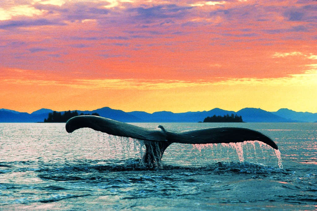 WhaleTailSunset