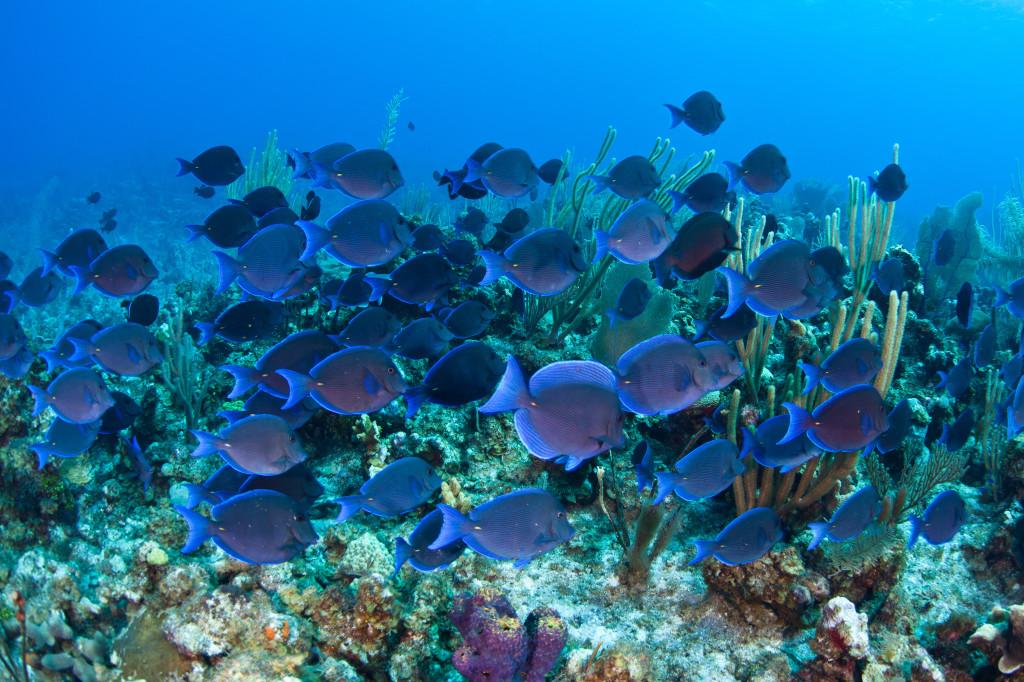 snorkeling Grand Cayman Island
