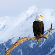 Take a Christian Cruise with Intentional Living 2020 Alaska Cruise - Christian Cruise to Alaska - June 28-July 5, 2020