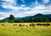 Tennessee Foothills